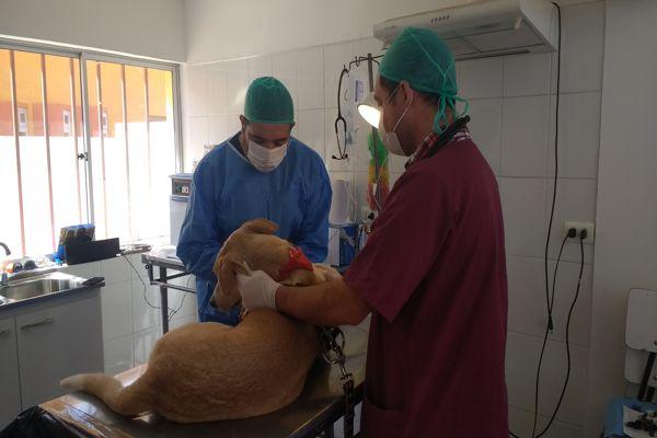 Esterilizan y ponen chip de identificación a mascotas de vecinos en Chañaral