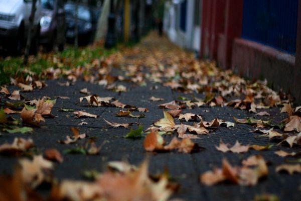 El otoño comienza en Chile este martes 20 de marzo a las 12 horas y 15 minutos.