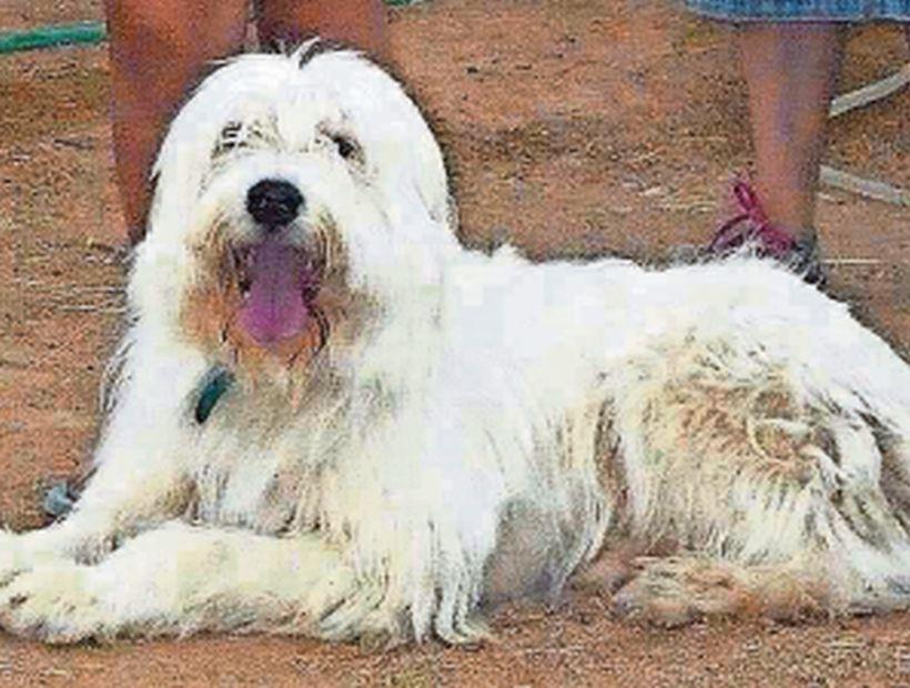 Perrito fue por un baño y murió en veterinaria de Chañaral