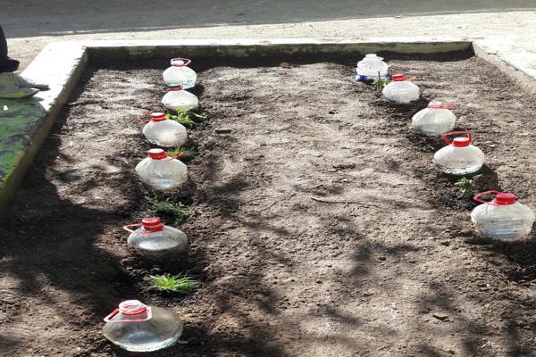 Escuela Marta Aguilar de Tierra Amarilla necesita apoyo de la comunidad para ganar concurso nacional de ciencias