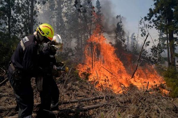 Decretan alerta roja por incendio forestal en Valparaíso