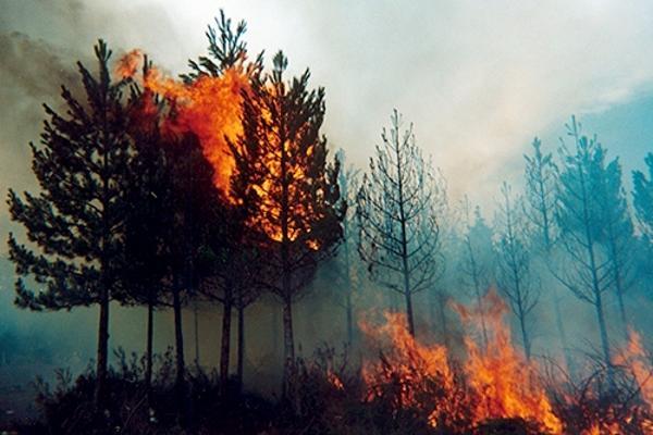 NUEVAS BRIGADAS SE SUMAN AL COMBATE DE INCENDIOS FORESTALES