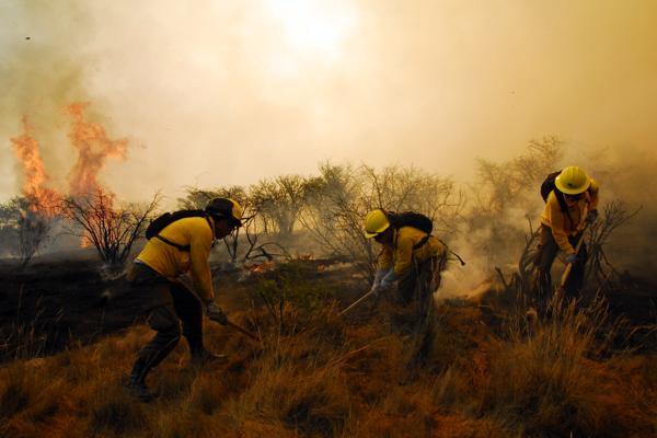 Por temperaturas extremas y vientos Conaf llama a prevenir incendios forestales