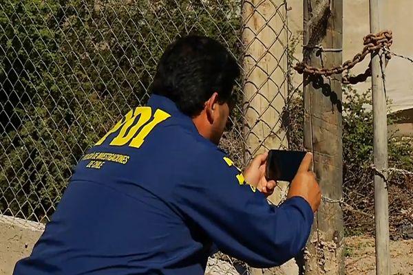 Detectives investigan muerte de perros en sector norte de Copiapo