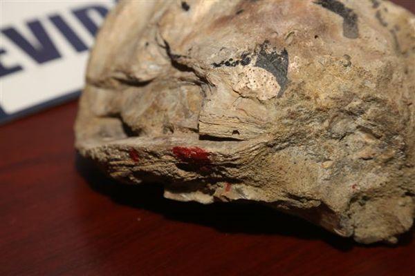 PDI detecta fósil de 2,58 millones de años aproximadamente en vivienda de Copiapo