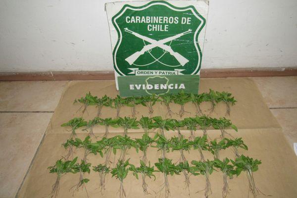 En Diego de Almagro Carabineros detuvo cinco personas prófugas de la justicia