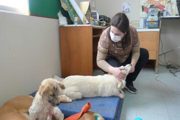 Culminan operativos de esterilizaciones gratuitas de mascotas en Huasco