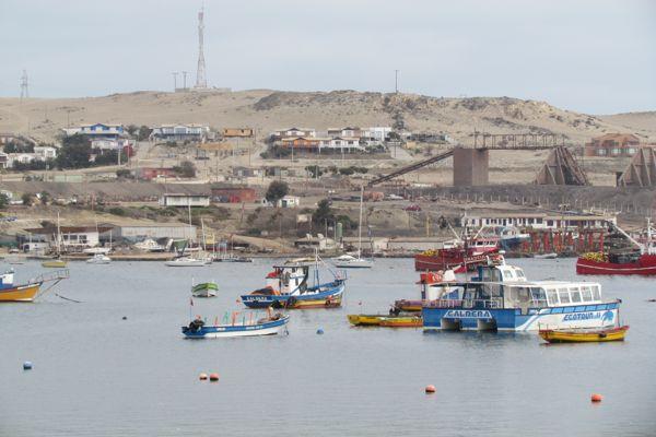 Subpesca abre proceso de postulaciones a los Consejos Zonales de Pesca