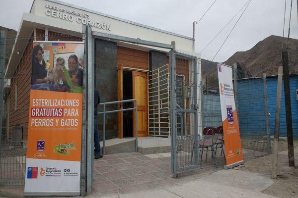 Esta semana culminan los operativos de esterilización con microchip de mascotas en Chañaral