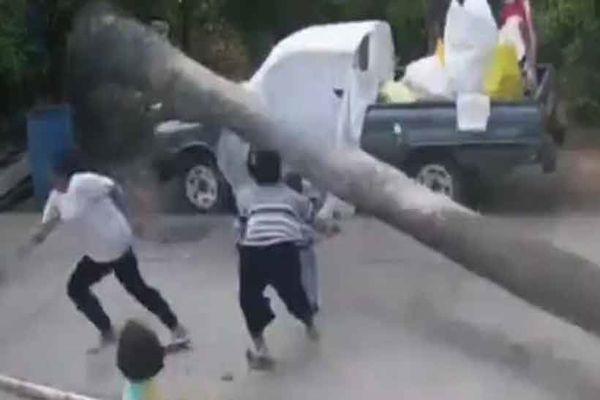 Niño se salvó de ser aplastado por una palmera de más de 9 metros en Tailandia