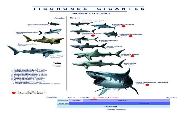 Caldera fue el paraíso para los tiburones prehistóricos