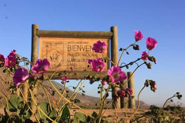 Conaf prepara plan de contingencia para el Parque Nacional Llanos de Challe por Fiestas Patrias