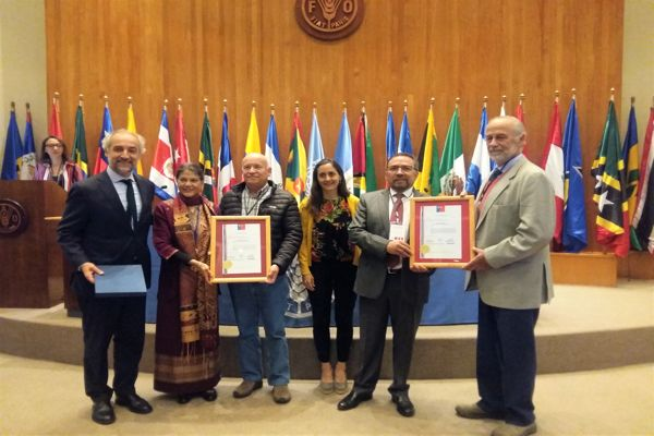 Aceite de Oliva del Valle del Huasco es reconocido con sello de Denominación de Origen •