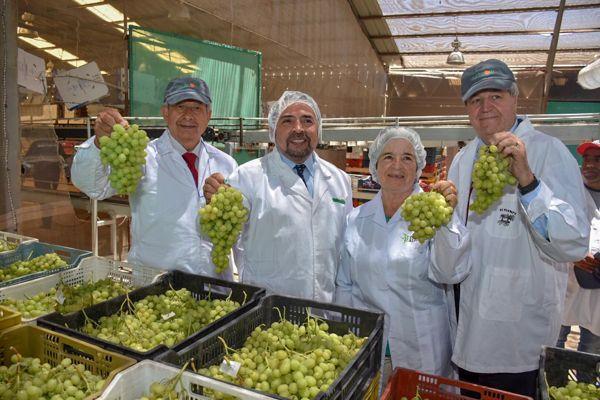 Copiapó inicia la temporada de cosecha de uva de mesa de exportación