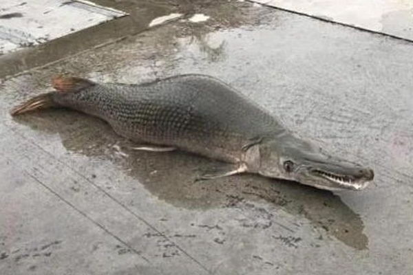 """Criatura """"mitad pez y serpiente"""" dejó perplejos a visitantes de un lago"""