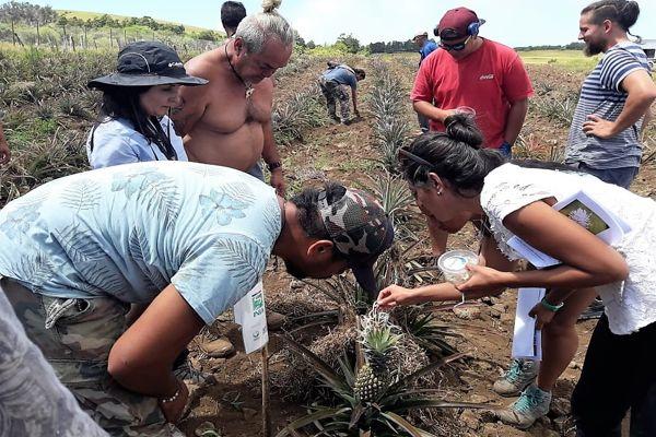 Uso de controladores biológicos en Rapa Nui: en la senda de una agricultura más limpia