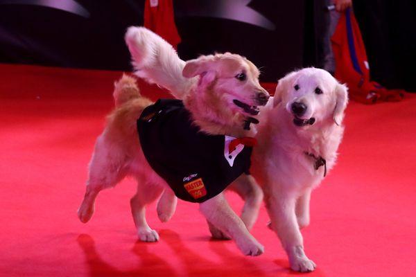 Atom y Humber, los perros de Alexis Sánchez que causaron ternura en alfombra roja de «Mi amigo Alexis».