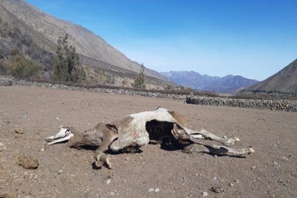 Decretan Zona de Catástrofe por sequía para las comunas continentales de la región de Valparaíso