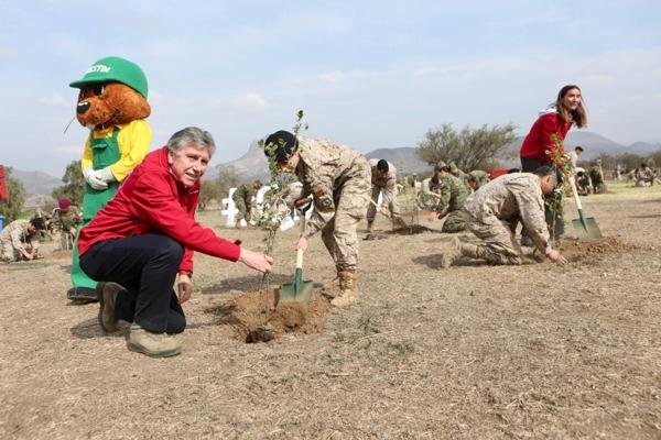 Alianza de CONAF y el ejercito permitirá plantar 100 mil arboles en 4 años